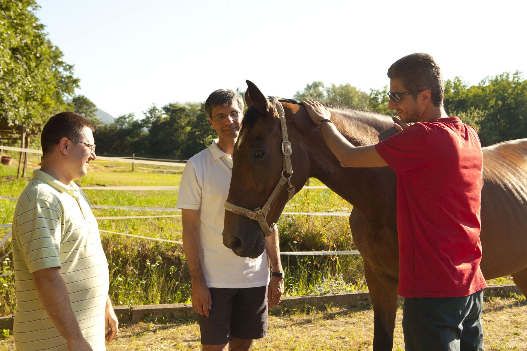 Horses_TeamChallenge_8276