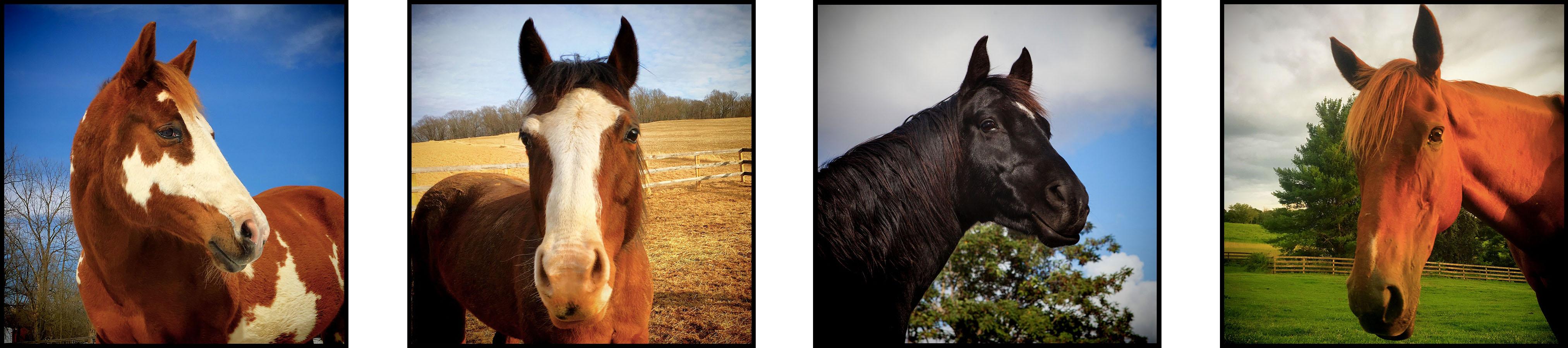 4 Horse Portraits