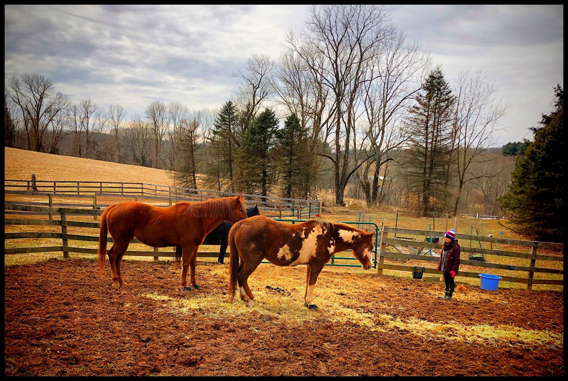 Amy+Herd3